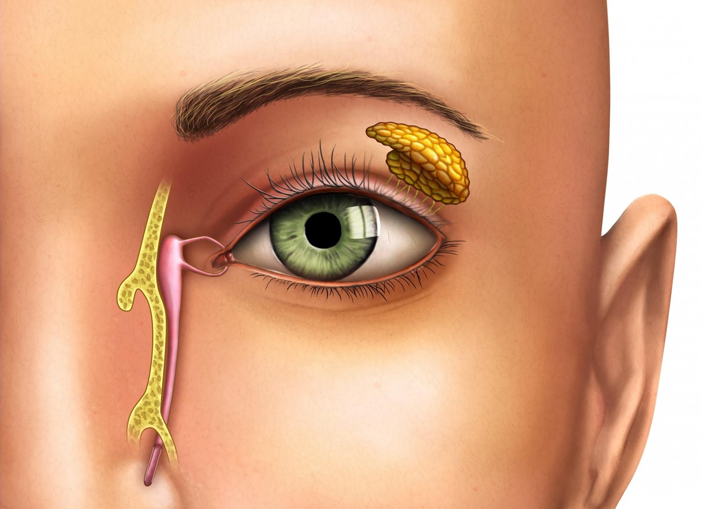 Pathologies des voies lacrymales